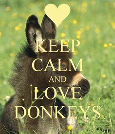 KEEP CALM AND LOVE DONKEYS