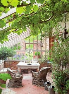 Love grapevines growing in a conservatory .... Bohemian Pages: The Conservatory....