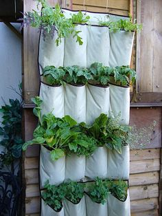 Herb Organizer  A creative and economical way to build one of those coveted vertical gardens. Turn a pocket shoe organizer into a veggie patch!