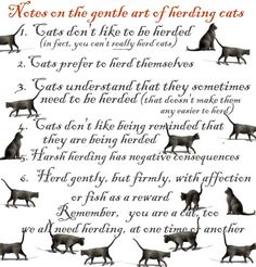 ... being a leader of teenagers can sometimes be like herding cats