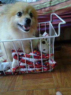 My lovely cutieeee dog.......
