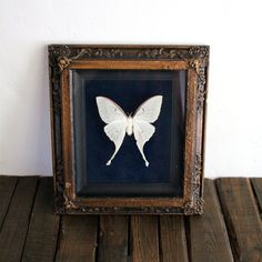 Vintage Real Large Butterfly Moth White Moth Taxidermy Oddities #etsy