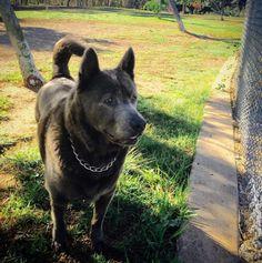Woof! - Grape Street Park - San Diego, CA - Angus Off-Leash #dogs #puppies #cutedogs #dogparks #sandiego #california #angusoffleash