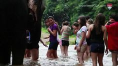 #GLA #Thailand: The #Elephant Village Initiative - Check out our new video!