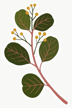 free png of Eucalyptus branch with seeds transparent png Hand painted watercolor green leaf vector Nature Illustration, Floral Illustrations, Eucalyptus Branches, Plant Aesthetic, Scandinavian Folk Art, Plant Drawing, Botanical Drawings, Botanical Flowers, Pattern Art