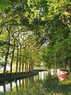 Canal du Midi : sa restauration végétale a été validée !