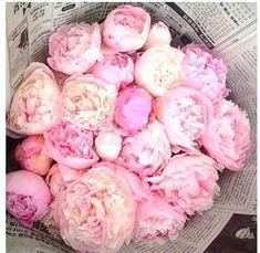 Peonies Flower Power, My Flower, Blush Peonies, White Peonies, Piones Flowers, Fresh Flowers, Beautiful Flowers, Planting Flowers, Wedding Flowers