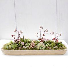 Low succulent dish garden for an outdoor centerpiece ... Arrangement by Dalla Vita