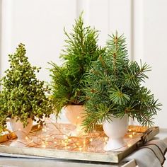 Clipped greens (in floral foam) displayed in egg cups make a mini forest when grouped on a silver tray. A strand of starry lights adds sparkle. More ideas for easy Christmas decorating with natural materials: http://www.midwestliving.com/homes/seasonal-decorating/nature-inspired-christmas-decorations/?page=9