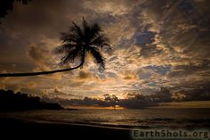 Sunset Palm by SBL