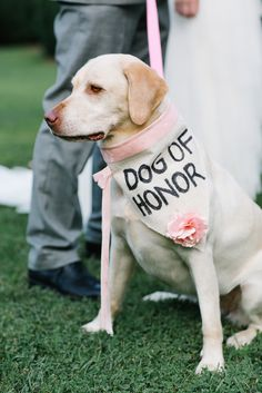 """Our dog Aspen is a wild woman. She is definitely our best pal and we take her with us almost everywhere,"" Kate says. ""When we decided to make her the flower girl, ring bearer, dog of honor (we drew the line at officiant), we fully expected her to do something crazy or just bark for the entire ceremony. We were absolutely shocked when she laid down for the whole ceremony. She was so comfortable that we had to drag her away when we turned to walk out. I made her dog of honor collar with th"