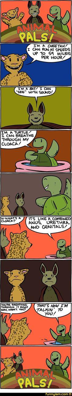 Turtles(: