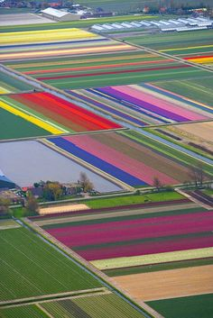 Aerial view of tulip fields, northern Netherlands   Copyright for this gallery photo belongs solely to Jim Zuckerman. Images may not be copied, downloaded, or used in any way without the express, written permission of the photographer.