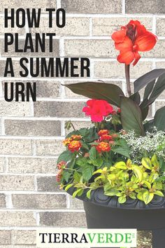 Learn how to use the Thriller-Filler-Spiller method to plant a summer urn, with guest June Spanier of June of All Trades.  Choose plants of varying heights, textures and colors to build layers from back to front of the arrangement, as well as symmetry from the centre outwards. Recycled Rubber, Urn, Timeless Design, Thriller, Centre, Planters, Colors, Garden, Summer