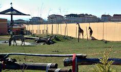 Darıca Faruk Yalçın Hayvanat Bahçesi / Zoo - Türkiye