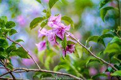 NATURE & FLOWERS _____ #nature #naturelover #naturelovers #naturephotography #natureza #naturegram  #naturebeauty #photography #photographer #beautifull #park #parque #jardim #garden #fotografia #fotografo #ronaldoichi #摄影 #色彩 #カメラマン #フォトグラフィー #写真 #自然 #植物 #摄影 #色彩 #カメラマン #フォトグラフィー #写真 #自然 #植物 #花 #flower #flowers #flowerslovers #flowerslover #flowersgram