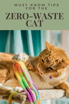 The Zero Waste Cat - Paws and Pines