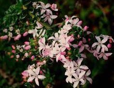native australian plants - Google Search