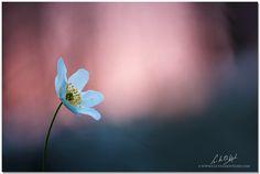 anemone by Luc Van De Weghe on 500px