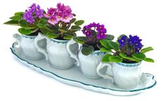 african beauty This cute ceramic tea set fits any decor and makes a unique and adorable gift! It consist of an elegant painted ceramic tea set with 4 beautiful Optimara Mini African Vi Saintpaulia, Great Mothers Day Gifts, Tea Pot Set, Green Plants, Container Gardening, Indoor Plants, House Plants, Flower Pots, Floral Arrangements