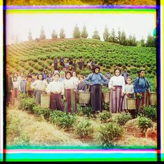 Photo credit: Sergei Mikhailovich Prokudin-Gorskii. Group of workers harvesting tea. Courtesy Library of Congress