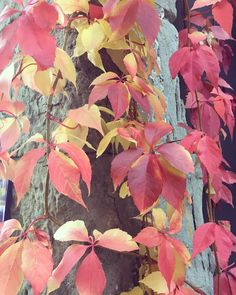 Zurich, Leaves, Inspiration, Instagram, Fall, Painting, Color, Biblical Inspiration, Autumn