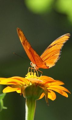 On top of the world ~flower and butterfly