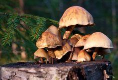 some mushrooms