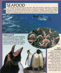 Penguin Facts | Penguin Place Penguin Facts, Antarctica, Penguins, Seasons, Animals, Animales, Animaux, Seasons Of The Year, Penguin