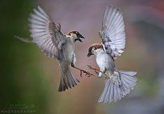Luft Akrobatik by Urs Schmidli