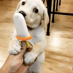 Share this with someone who really needs to see a puppy eat a pupsicle. | Take…