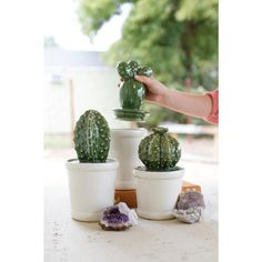 Kalalou Ceramic Cactus Canisters - Set Of 3 - Store your favorite keepsakes or other goodies with this set of canisters. With cactus lids and white flower pot bottoms, these ceramic succulents will flourish on your bookshelf or kitchen counter top. Ceramics Projects, Clay Projects, Ceramics Ideas, Ceramic Pottery, Ceramic Art, Cactus Ceramic, Ceramic Decor, Keramik Design, Kitchen Canister Sets