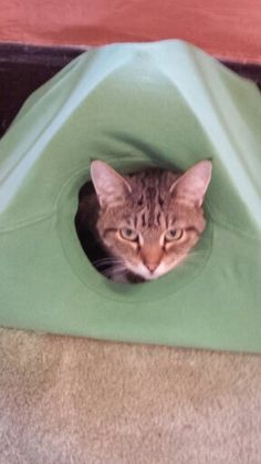 Tigger in new kitty tent I made