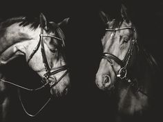 Photograph All the beautiful horses by Elke Vogelsang on 500px