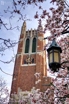 Beaumont Tower among the magnolias, Michigan State University