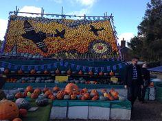 Wonderful Slindon pumpkins