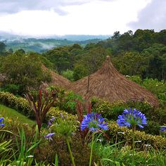 This sure looks like where we stayed - Ambua Lodge, Tari - Papua New Guinea