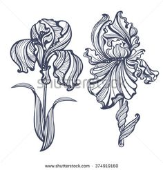 graceful isolated iris in vintage style Art Nouveau. It can be used as embossing, tattoo, postcards or engraving