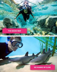 Grand reef swim and sharks