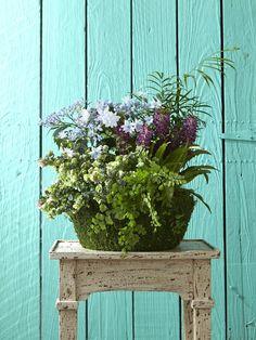 Lacecap Smooth Hydrangea, Hydrangea Care, Hydrangea Not Blooming, Blue Hydrangea, Growing Hydrangea, Hydrangea Potted, Hydrangea Macrophylla, Kalanchoe Blossfeldiana, Ficus Pumila