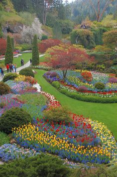 Butchart Gardens, Victoria, Vancouver Island, Canada. More than 50 acres of land covered with over 700 plants. The Gardens served as a quarry but were then turned into a wonderland of colourful fabulous and magnificent display of flowers, bushes and trees. Butchart Gardens are located in Victoria on Vancouver Island. Loved it