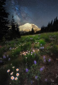 Starry Night on Mount Rainier Photo by Protik Mohammad Hossain All Nature, Amazing Nature, Mother Earth, Mother Nature, Beautiful World, Beautiful Places, Art Brut, Berg, Night Skies