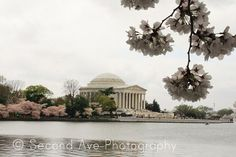 Fine Art Jefferson Memorial with Cherry Blossoms // Photography by SecondAvePhotography, $28.00