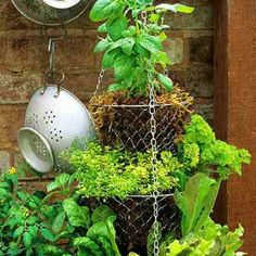 I love this for growing herbs!