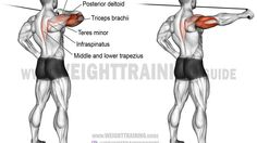 A rare unilateral compound exercise. Target muscles: Triceps Brachii and Posterior Deltoid. Synergistic muscles: Lateral Deltoid, Infraspinatus, Teres Minor, Rhomboids, and Middle and Lower Trapezius. Fitness Workouts, Fitness Tips, Health Fitness, Training Workouts, Men Health, Workout Routines, Big Muscle Training, Weight Training, Triceps Workout