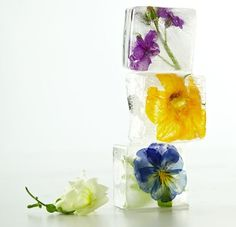 edible flower icecubes (idea from martha stewart)
