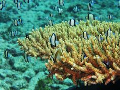 Scuba Diving in the Watamu Marine Park - Picture of Ocean Sports ...