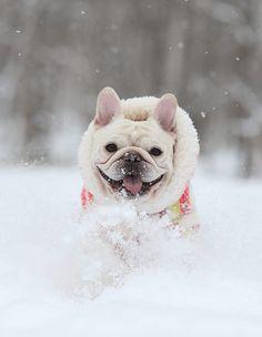 Oh my dream dog!