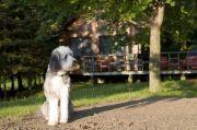 Pet-friendly accommodation in Bailieboro, Ontario: Wildwood Cottage Resort