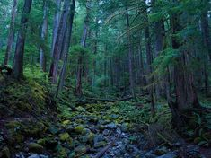 Hoh Rain Forest Picture – Olympic National Park Wallpaper - National Geographic Photo of the Day